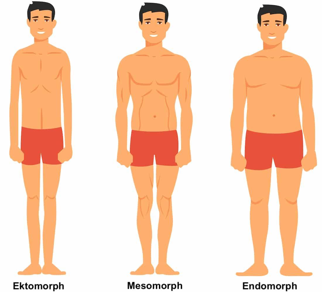 Muskelaufbau Körpertypen